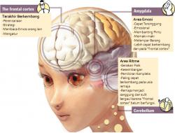 Otak 2.png